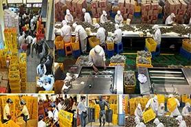 富事达为嘉兴五芳斋集团提供粽子专用塑料周转箱
